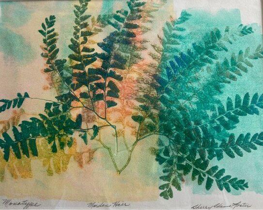 """Sherry Adams Foster, """"Maidenhair Fern"""", monotype, 15 1/2 x 17 1/2, $135"""