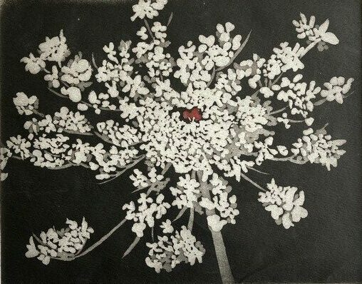"""Sherry Adams Foster, """"Queen Anne's Lace"""", etching and aquatint, 13 x 16, $150"""