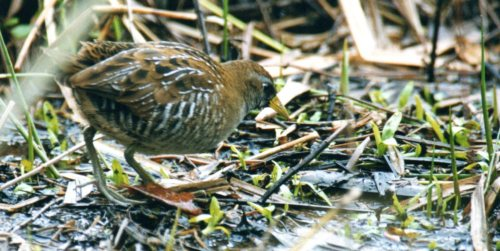 The Sora at Stover