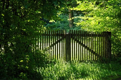 wood fence nature