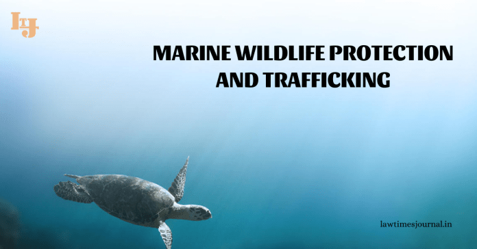Marine wildlife protection and trafficking