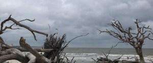 Driftwood beach on a cloudy day
