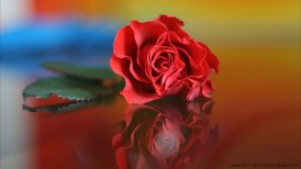 rose-day-2013-wallpaper-for-valentinesday (12)