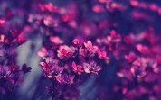 Violet-Purple-Flowers