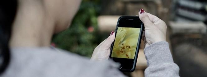 5 aplicaciones gratuitas para continuar la vida social en cuarentena