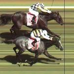 Lay The Place – Horse Racing Place Laying System