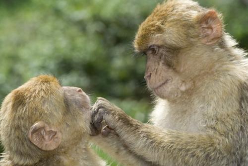 Lausen statt reden - mach's wie die Affen!