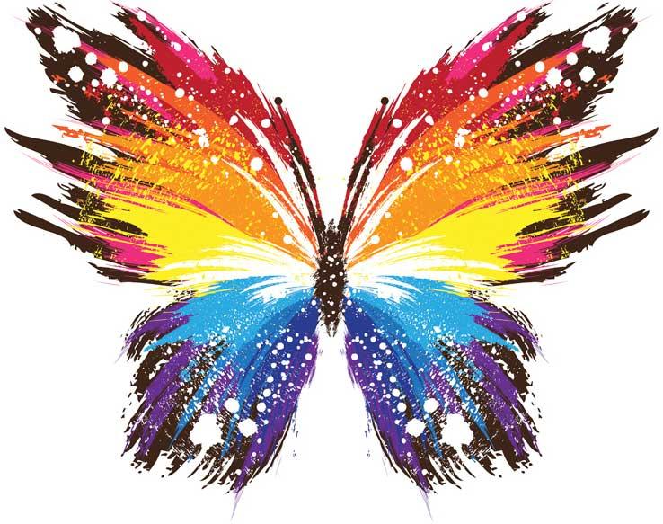 Von der Raupe zum Schmetterling - Online-Jahreskurs 2017