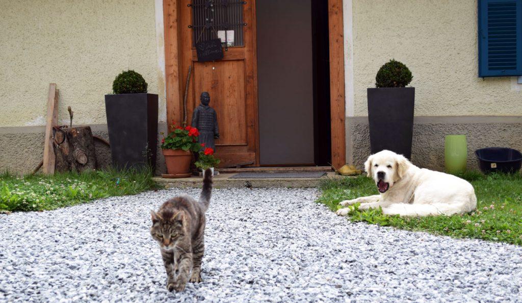 Leben mit Tieren war immer schon Helgas Traum. Der humpelnde Kater Emil und Golden Retriever Merlin machten den Anfang. Hühner, Schafe und Esel folgen ... vielleicht, irgendwann.