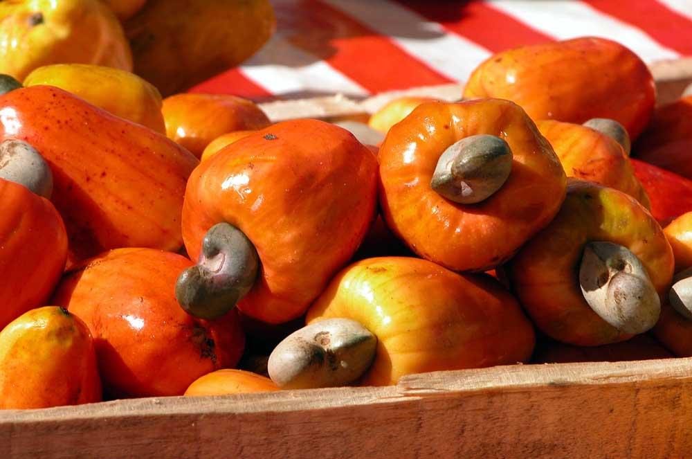 Der Cashew-Apfel sieht aus wie eine Paprika