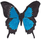 butterfly_transparent_300px