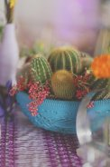 Bright color cactus bowls