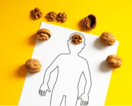 Las nueces tienen forma de cerebro y contienen propiedades beneficiosas para los procesos cerebrales