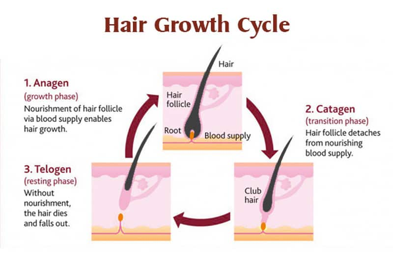 What Is Club Hair And How To Identify It?