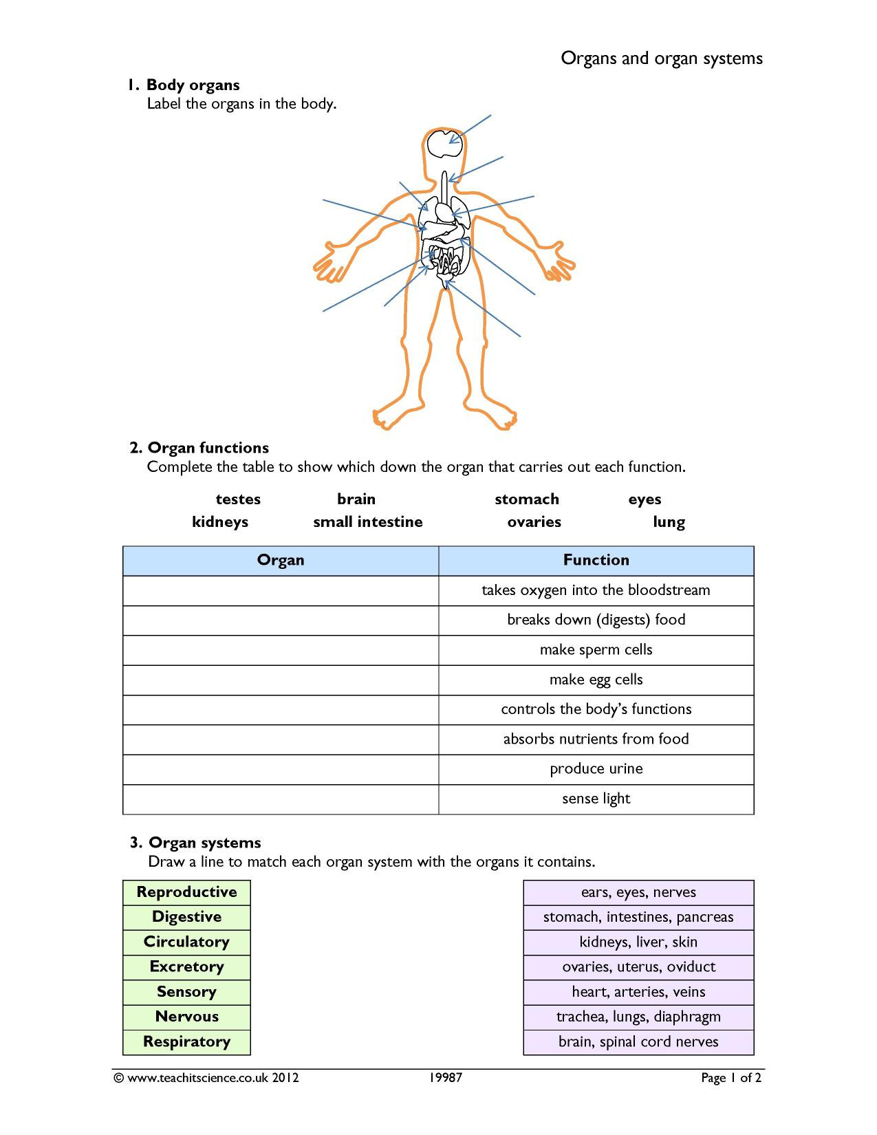 30 Human Body Systems Matching Worksheet