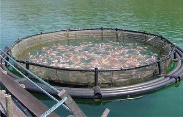 Michoacán, con gran potencial pesquero: Compesca.
