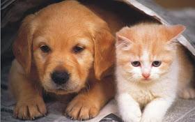 No solo a las personas, así afecta el calor a los perros y gatos.
