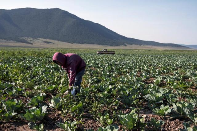 Austeridad de la 4T deja sin seguros a sector agropecuario