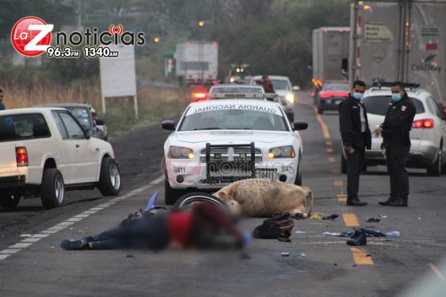 Dos motociclistas mueren tras chocar contra una vaca en la Zamora – La Piedad