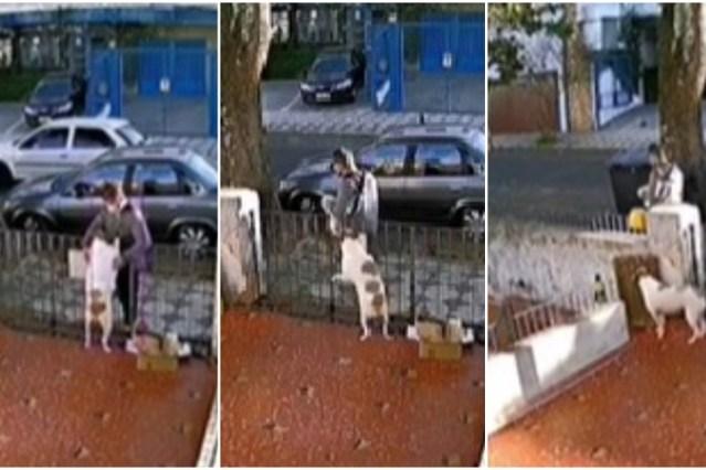 Perro es víctima de robo; lo engañan con caricias para quitarle suéter