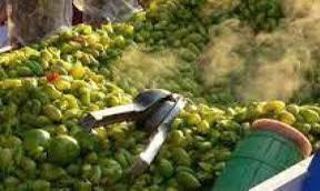 Michoacán produce garbanzo grano en 43 municipios