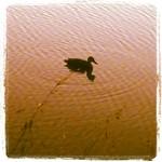 quack! @ 20:57