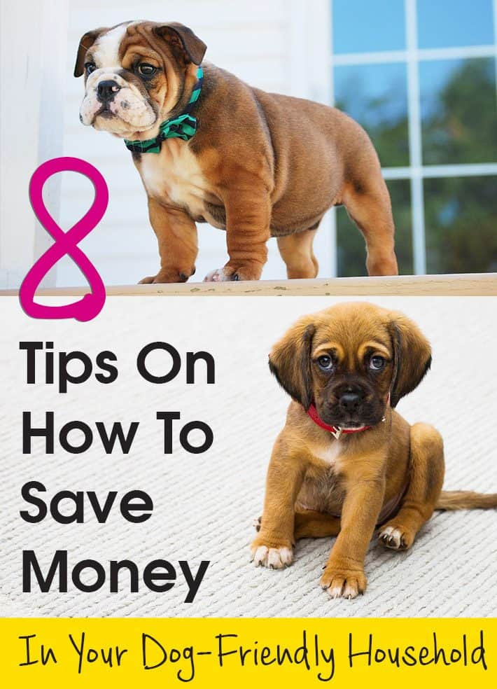8 Tips On How To Save Money In Your Dog-Friendly Household