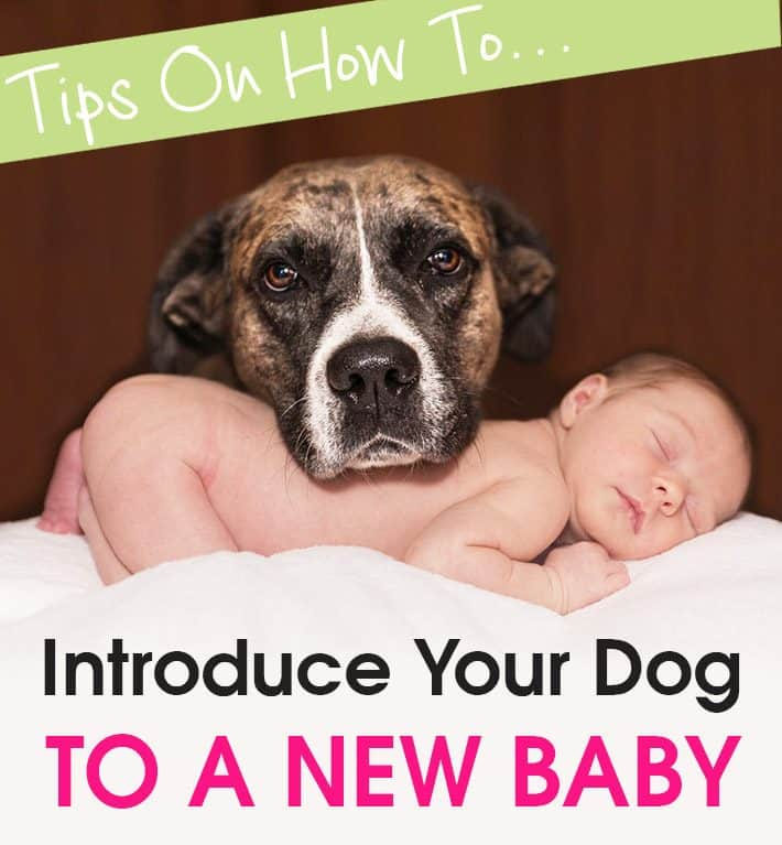 Tips On How To Introduce Your Dog To a New Baby