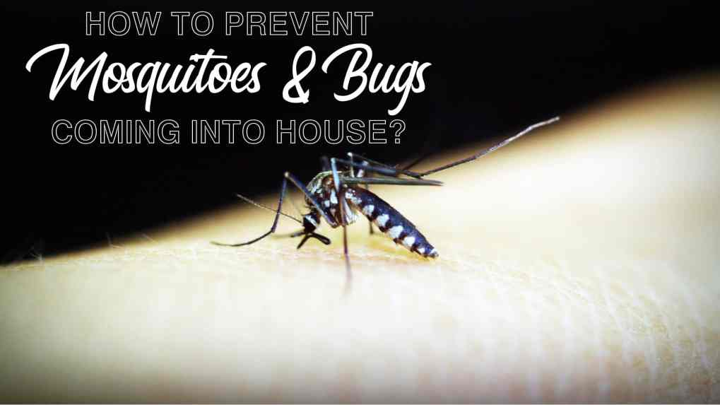 How to prevent mosquito and bugs coming into house