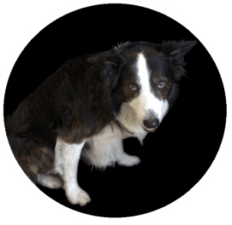 lazy-dog-bg-300x293