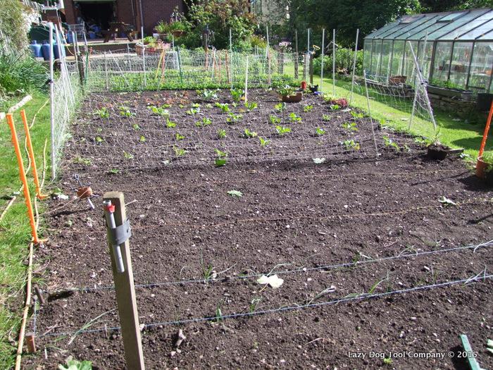 Alex-Maddrell's-Garden-002