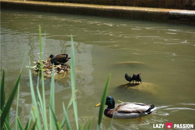 Lisbon 2108 museum ducks