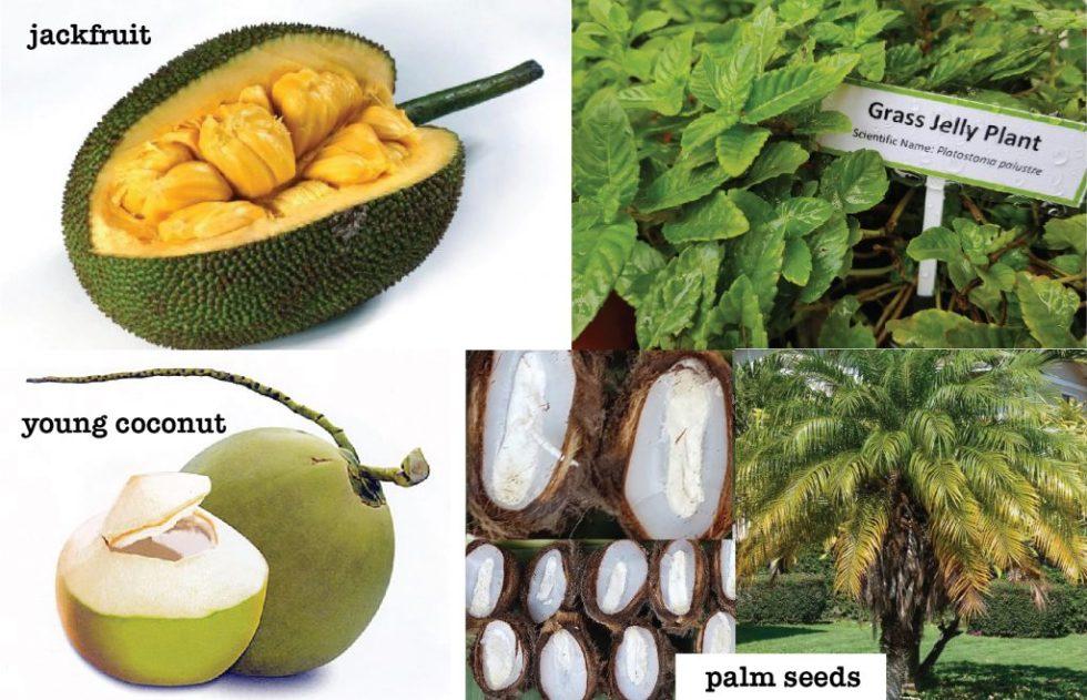jackfruit palm seeds coconut grass jelly
