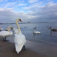 Zimowy weekend nad morzem - Sopot