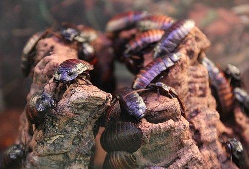 Польза тараканов на Земле