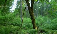 PRAC takes important step in preserving LBA Woods!