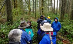 Rain Lures Enthusiasts for First Walk in the Woods