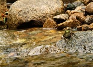 frog_waterfalls
