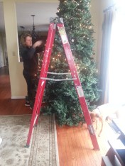 We finally got the tree up, and are now checking to make sure the lights are working.