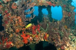 artificial-coral-reef-florida-keys-diving.jpg