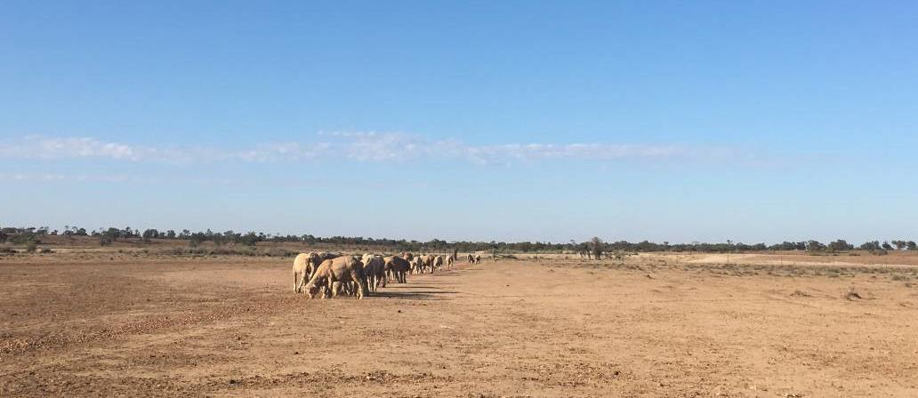 50% of the cost of moving stock, food and water available to NSW farmers