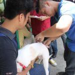 Batong Malake, UPLB Vets hold Anti-Rabies Vaccination Drive