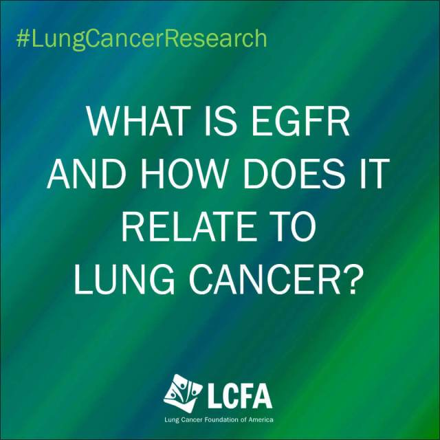 What is EGFR and how does it relate to lung cancer?