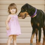 Imagine You Rescue a Doberman and He Rescues Your Toddler!