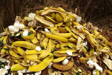 Banana peels fertiliser