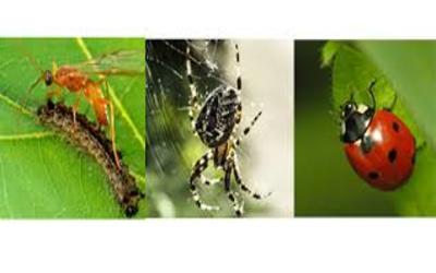 लाभकारी कीट
