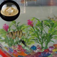 Wall Mounted Fish Tank Acrylic Bowl - Life Changing Products