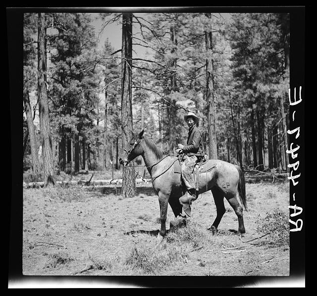 Cowpuncher in summer pasture. Deschutes National Forest, Oregon