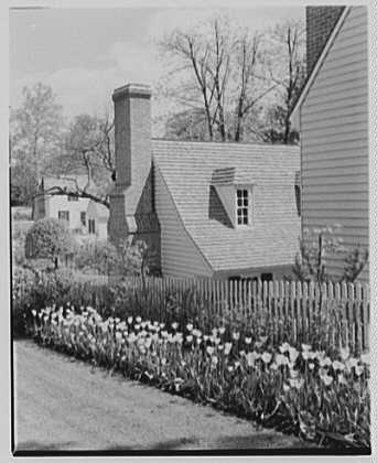 Williamsburg, Virginia. Garden with yellow tulips II, against print shop