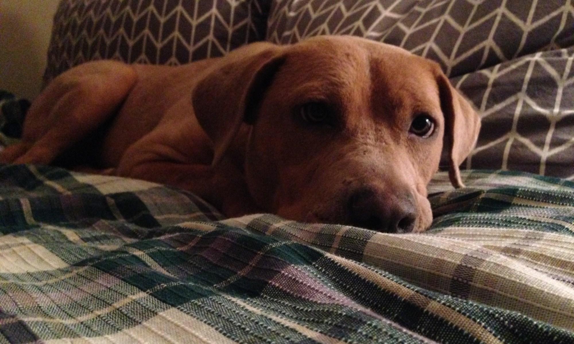 Photo of editor dog
